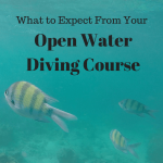 Want to become scuba diver but not sure what to expect from the open water diving course? Read this guide to find out everything you need to know!