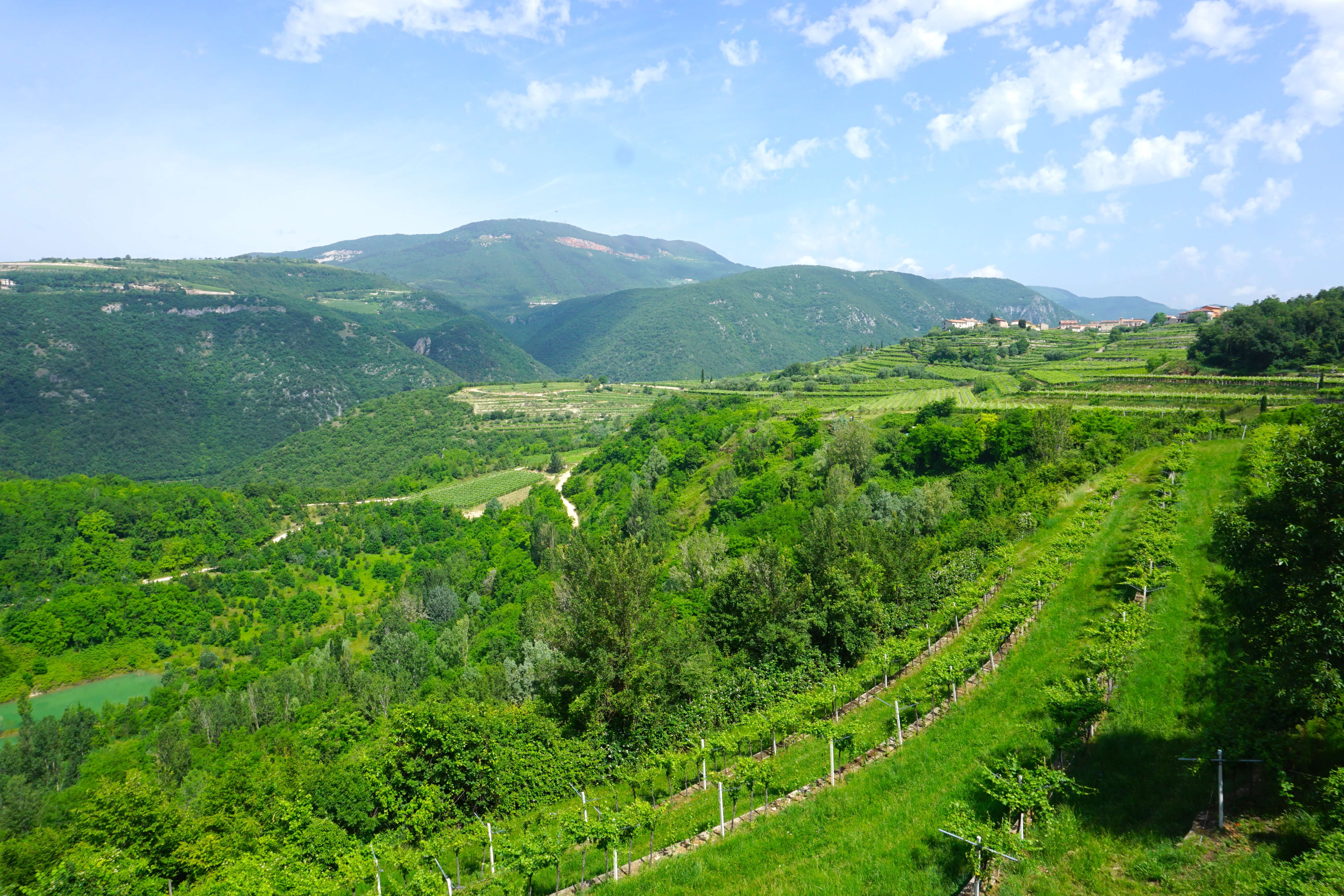 Stunning green vineyards with a mountainous backdrop in the Valpolicella wine region