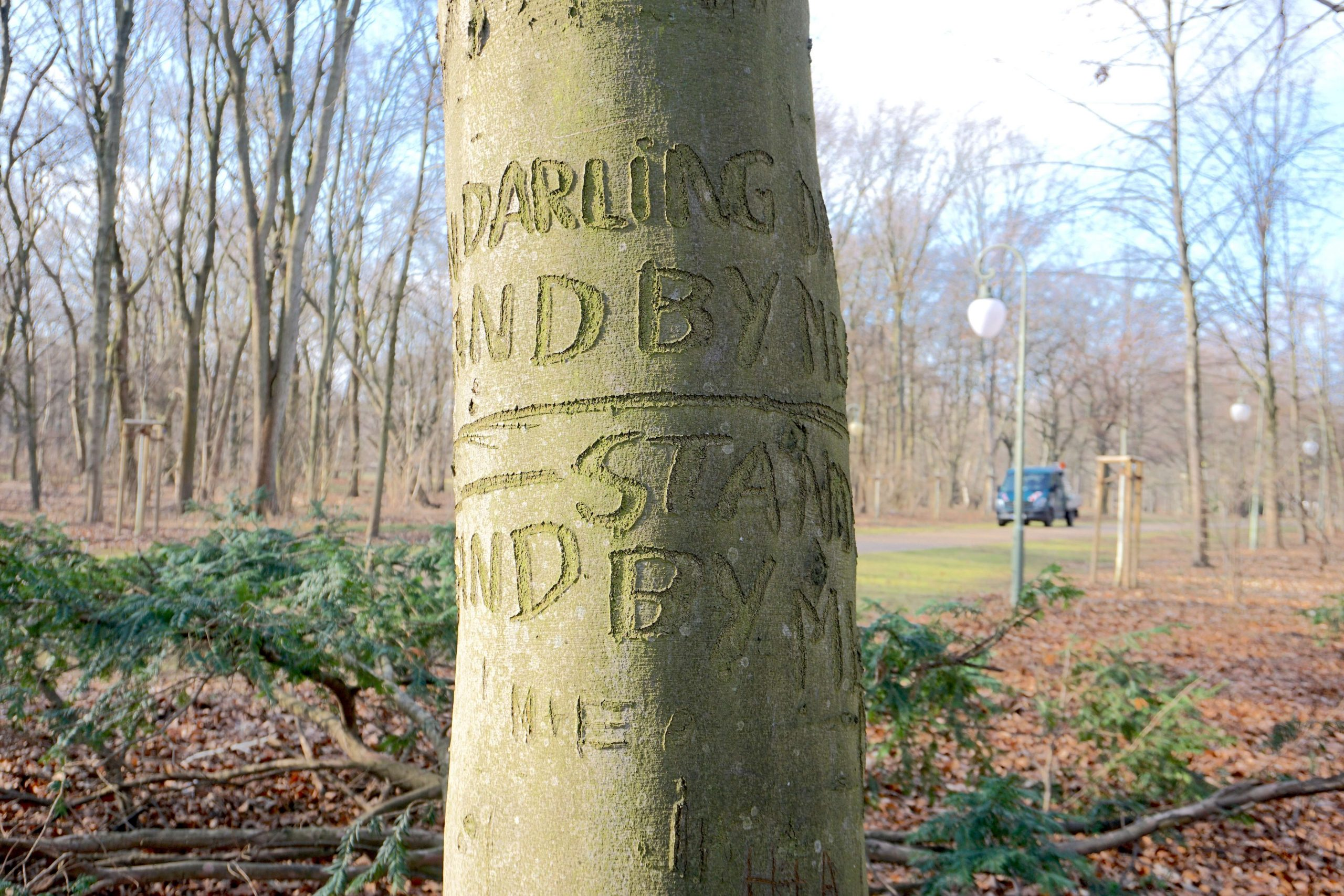 The Stand By Me Tree in Berlin - A tree with the chorus of the song Stand By Me carved into it