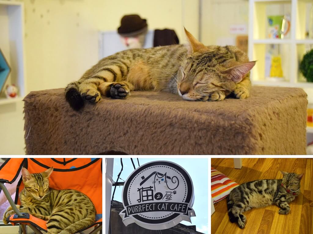 Purrfect Cat Cafe - one of the cool cafes you can visit in George Town, Penang