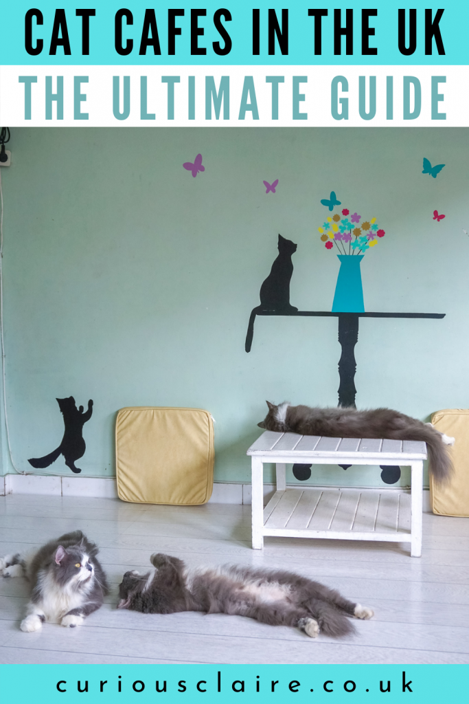 Cat cafes are hugely popular all over the world. If you're looking for cat cafes in the UK check out this ultimate guide! Here you'll find the best cat cafes in England, Scotland, Wales and Northern Ireland