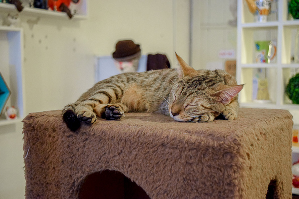 A cute cat sleeping at a cat cafe - one of the many great reasons to visit a cat cafe in the UK