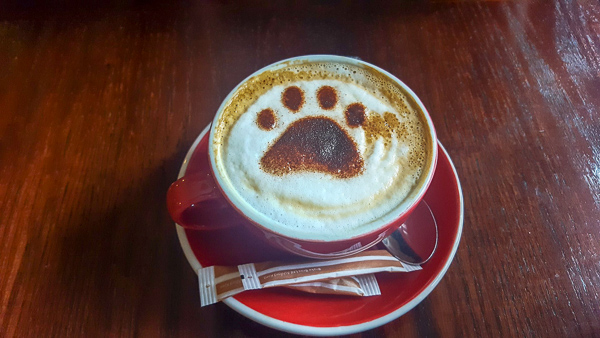 A delicious cup of coffee with a cat's paw dusted into the foam - cute cat themed coffees are one reason I love visiting cat cafes in the UK