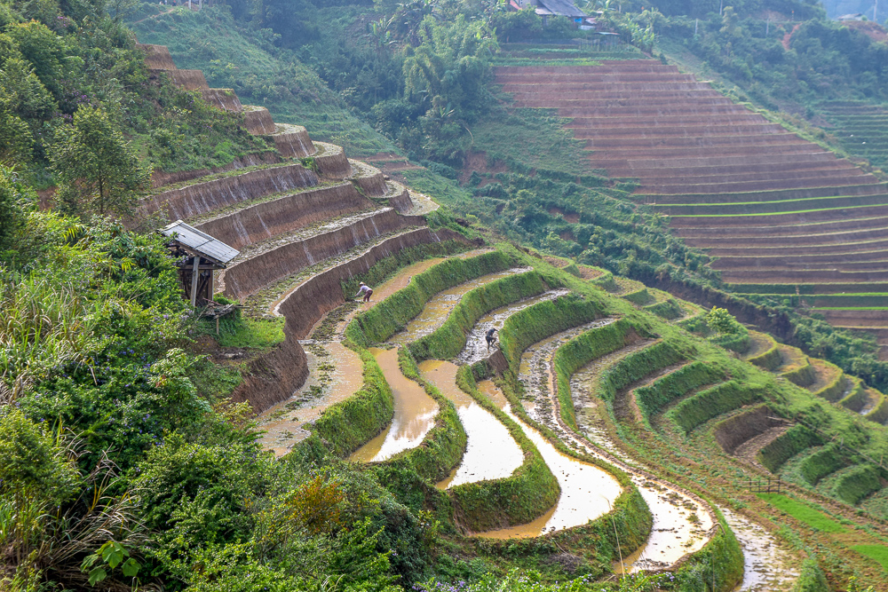 You can't show off pictures of Vietnam without showing a picture of stunning green rice fields with local farmers working